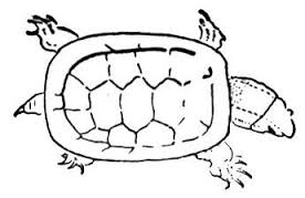 tartaruga vista dall'alto